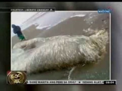 mysterious sea creature in appari cagayan