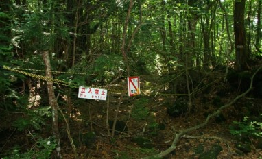 Japan's Haunted Forest of Death